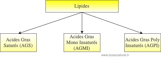Schéma lipides AGS AGMI AGPI